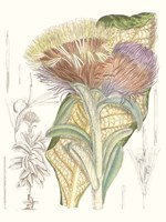 Tropical Variety IX Framed Print