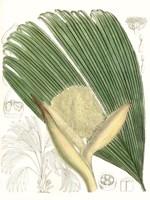 Palm Melange II Fine Art Print
