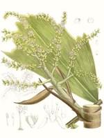 Palm Melange III Fine Art Print