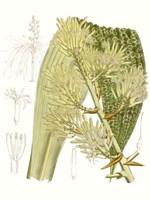 Palm Melange VI Fine Art Print