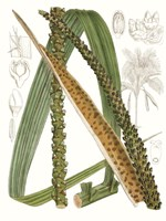 Palm Melange IX Framed Print