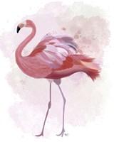 Fluffy Flamingo 1 Framed Print