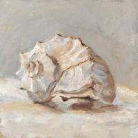 Impressionist Shell Study II Framed Print