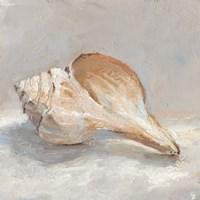 Impressionist Shell Study III Framed Print