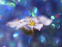 Jewels of the Enchanted Forest VI Fine Art Print