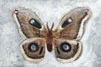 Papillon de Nuit II Framed Print
