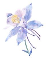 Columbine Bloom II Fine Art Print