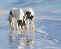 Water Horses I Fine Art Print