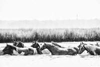 Water Horses III Fine Art Print