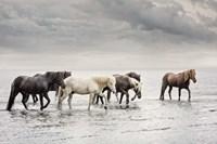 Water Horses IV Fine Art Print