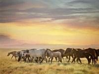Sunkissed Horses I Fine Art Print