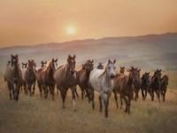 Sunkissed Horses II Fine Art Print