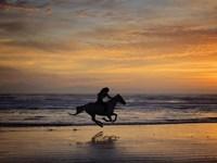Sunkissed Horses IV Fine Art Print