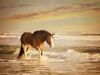 Sunkissed Horses V Fine Art Print