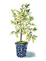 Fruit Tree II Framed Print