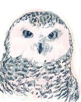 Funky Owl Portrait IV Framed Print