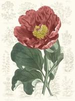 Peony Flower Garden I Framed Print