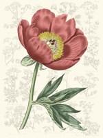 Peony Flower Garden III Framed Print
