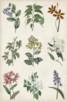 Botanical Chart I Framed Print