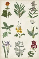 Botanical Chart II Framed Print
