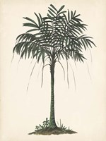 Palm Tree Study II Framed Print