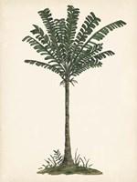 Palm Tree Study IV Framed Print