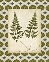Moroccan Ferns I Framed Print