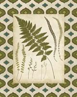 Moroccan Ferns II Framed Print