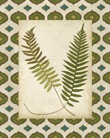 Moroccan Ferns III Framed Print
