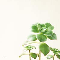 Succulent Simplicity X Neutral Fine Art Print