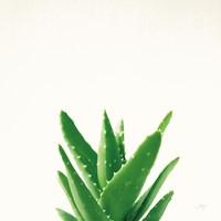 Succulent Simplicity V Neutral Fine Art Print