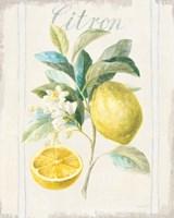 Floursack Lemon IV v2 Framed Print