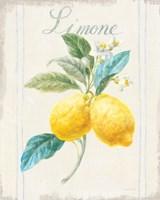 Floursack Lemon III v2 Fine Art Print