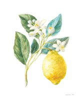 Floursack Lemon I on White Fine Art Print