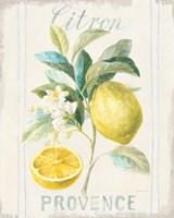 Floursack Lemon IV Framed Print