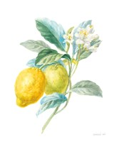 Floursack Lemon II on White Fine Art Print