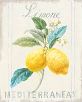 Floursack Lemon III Fine Art Print