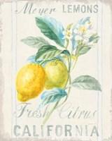 Floursack Lemon II Framed Print