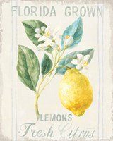 Floursack Lemon I Framed Print