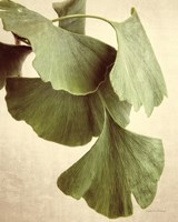 Gingko Color Framed Print