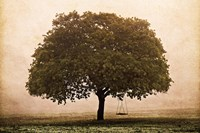 The Hopeful Oak Fine Art Print