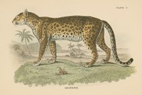 Vintage Leopard Fine Art Print