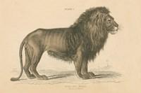 Vintage Lion Fine Art Print
