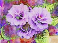 Primula Lilac Fantasy Fine Art Print