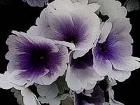Vainglorious Violet Fine Art Print