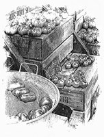 Rustic Display Of Tomatoes For Sale Black And White Fine Art Print