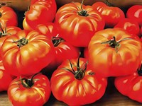 Rustic Tomatoes Fine Art Print