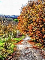 Walnut Avenue In Autumn Umbria Fine Art Print