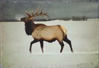 Silver Mist Elk Framed Print
