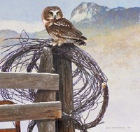 Saw-Whet Owl Rusty Fence Fine Art Print